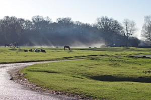 Beaulieu Heath, New Forest, near Keyhaven self-catering holiday home, Hampshire, UK