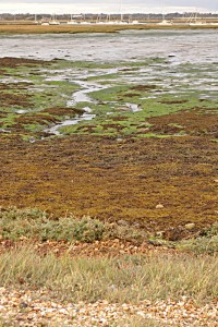 Saltmarshes, Keyhaven, near 2 Coastguard Cottages self-catering holiday home, Hampshire, UK